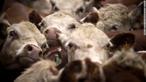 mad cow prion disease